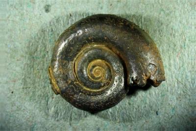 Größe 15 mm