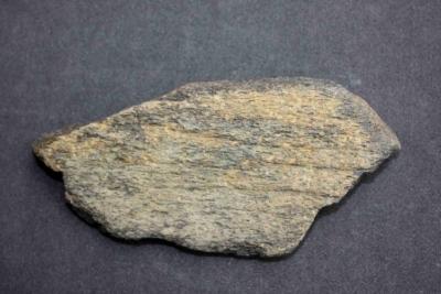 Versteinerter Knochen, Breite 110 mm