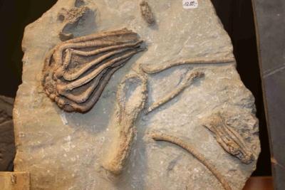 Und tolle Fossilien