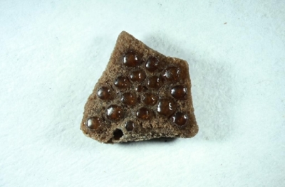 Ostracion cf. meretrix, Breite 5 mm, Sammlung und Foto: Thomas Noll