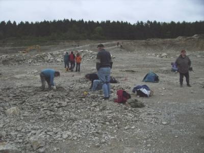 Die Fossilien stehen direkt an der Oberfläche an.