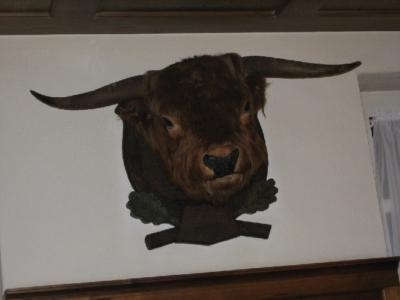 Noch kein Fossil, aber auch schon ziemlich Tot. Schottisches Hochlandrind, ein Steckenpferd von Herrn Kramer.