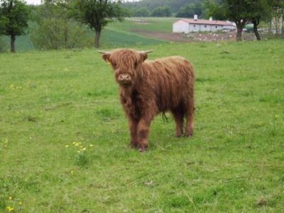Ein Schotte in jungen Tagen