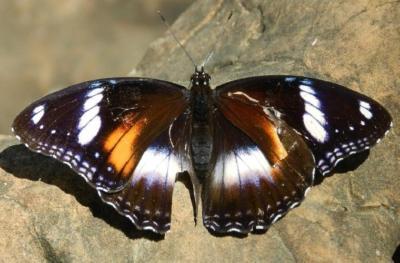 Nicht nur die Achate zeigen schöne Farben, die Schmetterlinge halten dagegen.