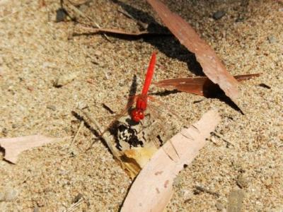 Und weiter in Fauna und Flora: eine Libelle