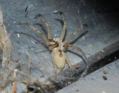 Jetzt wird's versponnen: eine kleine Spinne